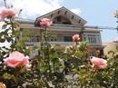 Nhà đất lên giá nhờ… hoa hồng