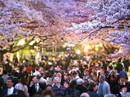 Đến thăm Nhật Bản vui mùa lễ hội hoa anh đào