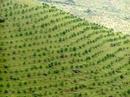 Bịa dự án trồng rừng 7-8 tỉ USD, lừa đảo cả tỉ đồng