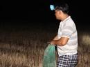Bồi hồi mùa soi nhái