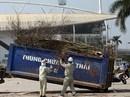 Hà Nội: Đào tết cả triệu bị quăng vào thùng rác