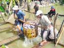 Cá tra sập bẫy thương lái Trung Quốc