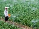 Cây trồng vẫn xanh tươi ở vùng tâm hạn
