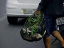 Lại tận diệt cá ở kênh Nhiêu Lộc - Thị Nghè
