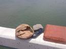Nhắn tin cho người nhà rồi lên cầu lao xuống sông