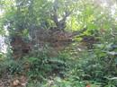 Hoang tàn di tích Chăm Pa ở Huế