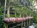 Cố níu màu tết Sài Gòn xưa
