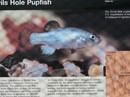 Cá cực hiếm chết tức tưởi vì... người tắm tiên