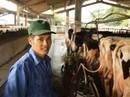 Thị trấn 600 tỉ phú, lái ô tô dạo thăm bò ở Việt Nam