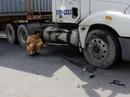 Va chạm xe container, nam thanh niên thiệt mạng