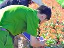 Đồng Nai: Cả ngàn chậu hoa Tết bị đập nát trong đêm