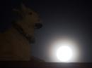 Siêu trăng kỳ ảo trên bầu trời Sài Gòn
