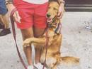 Cô chó thích ôm du khách ở New York