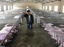 Nông dân Trung Quốc khóc nhìn 6.000 con heo chết chìm