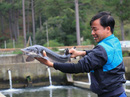 Mê nuôi cá tầm hơn làm an ninh hàng không
