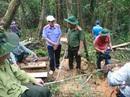 Đã làm rõ được các đối tượng phá rừng pơ mu
