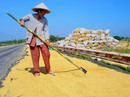 Gần 7.000 tỉ đồng tái cấu trúc ngành lúa gạo