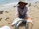 VIDEO: Nhà khoa học nói gì về kết luận cá chết của Bộ TN-MT?