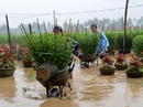 Quảng Ngãi: Nhiều hồ chứa đồng loạt xả lũ, hạ du ngập nặng