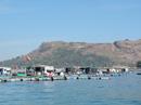 Không có chuyện cá nuôi chết do bị đầu độc ở Lý Sơn