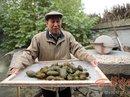 Trung Quốc: Phát minh giấy viết từ... phân gấu trúc