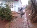 """Lâm Đồng có """"mưa vàng"""""""