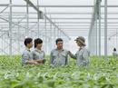 Vingroup liên kết với 1.000 HTX và hộ nông dân cung ứng nông sản sạch và an toàn