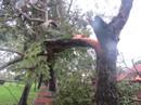 Áp thấp nhiệt đới khiến 1 người mất tích, cây ngã la liệt