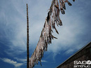 Mùa cá hố trắng những làng chài Đất Mũi Cà Mau