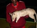 Mẹ đi chơi đêm, con gái 3 tháng tuổi ở nhà bị chuột cắn chết