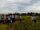 Hải Phòng: Sét đánh thương vong 6 người đi làm đồng