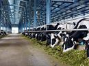 Thị trường sữa tươi còn rộng lớn
