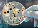 Thiết bị phát hiện vi khuẩn sinh sôi trong thực phẩm