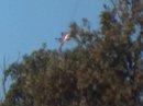 Thổ Nhĩ Kỳ tha kẻ tình nghi giết phi công Nga?
