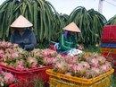 Tăng cường xuất khẩu thanh long sang Thái Lan