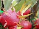 Trục xuất 8 người Trung Quốc thu mua nông sản trái phép