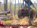 VTV lên tiếng về phóng sự điều tra phá rừng ở Đắk Lắk