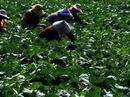 """Thán phục trước cách làm nông nghiệp sạch """"lạ đời"""" của người Nhật"""