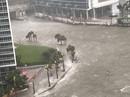 """Mỹ: Bão Irma vào Florida, """"tất cả ngập trong nước"""""""