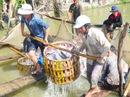 Mỹ kiểm tra nghiêm ngặt 100% lô cá tra từ Việt Nam