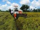 Đổ xô trồng lúa Nhật: Nhiều rủi ro