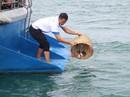 Ô nhiễm đe dọa Khu Bảo tồn biển Phú Quốc