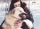 Cô gái được chó sói cứu khỏi bệnh trầm cảm sau khi bị cưỡng hiếp