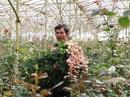 """""""Chợ hoa"""" ngàn tỉ tại TP HCM và Đà Lạt vận hành như thế nào?"""