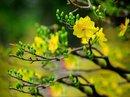 Loại hoa nào nên và không nên cắm trên ban thờ ngày Tết