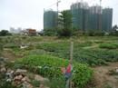 Cơn sốt đầu tư đang lan sang đất nông nghiệp