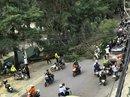 Thót tim cây tùng 30 năm tuổi đổ trên phố Đà Lạt