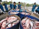 Trung Quốc đẩy mạnh nuôi cá tra để cạnh tranh với Việt Nam