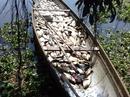 Gần 40 tấn cá chết, nhiều người trắng tay