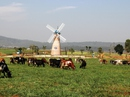 """Khám phá trang trại bò sữa """"3 không"""" đầu tiên ở Việt Nam"""